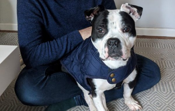 Bennu (formerly Wito), approx. 2 years, 20kg *foster home in London/UK*
